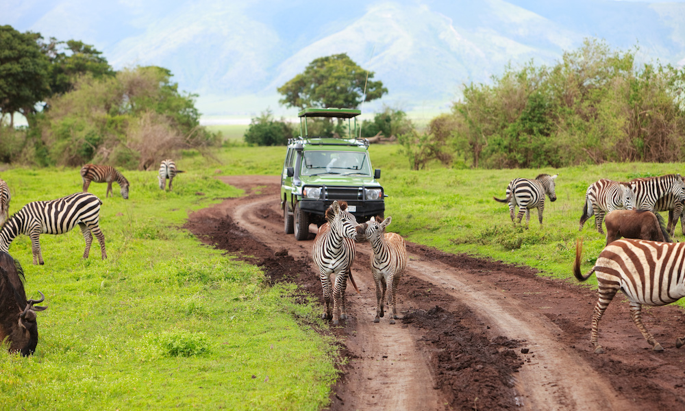 Big 5 Safari Kenya Collette Tours