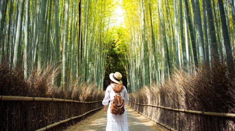Collette Tours Japan